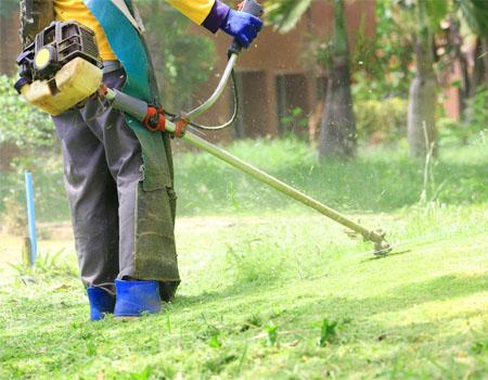 Chăm sóc cây cảnh sân vườn tại tphcm giá rẻ