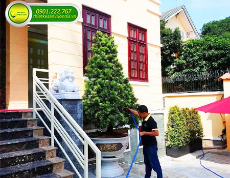 Dịch vụ chăm sóc cây cảnh sân vườn tại quận 7 tphcm