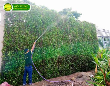 Dịch vụ chăm sóc cây cảnh sân vườn tại quận 9 tphcm