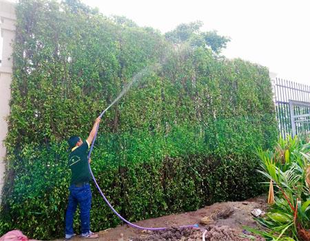 Dịch vụ chăm sóc cây cảnh sân vư�n tại quận 9 tphcm