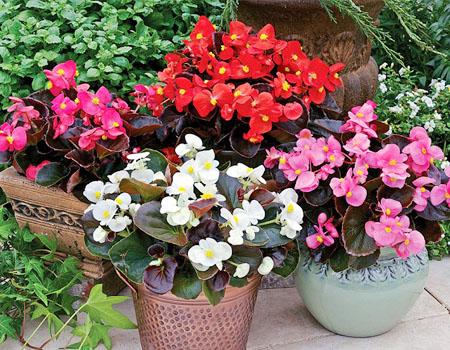 7 loại cây hoa mang may mắn đến với gia đình khi được trồng trong sân vườn