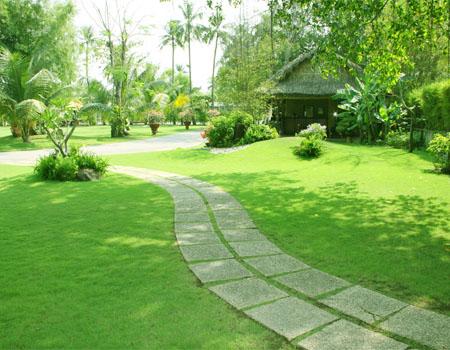 Những tiêu chí lựa chọn loại cỏ thích hợp trồng trong sân vườn