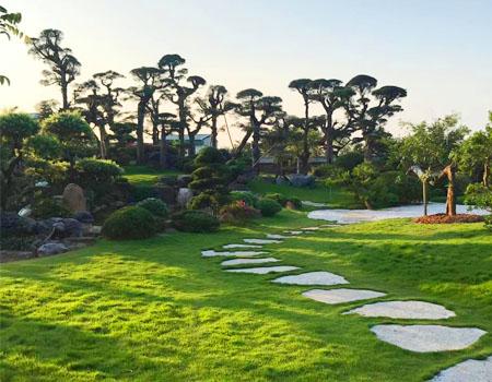 Tư vấn thiết kế sân vườn và quy trình thiết kế cảnh quan sân vườn